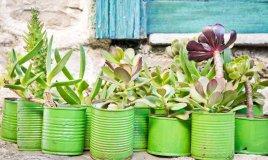 barattoli, piante grasse