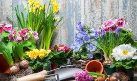 giardino di primavera, giardino principianti