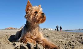 cane spiaggia consigli