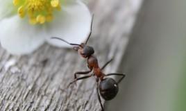 Formiche, casa