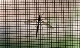 prevenzione zanzare