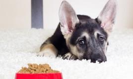 cucciolo, cane, mangiare