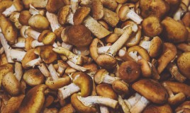 come pulire funghi chiodini