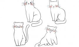 come disegnare gatto