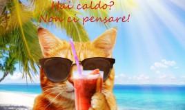 immagini divertenti caldo estivo, immagini caldo estivo, immagini divertenti caldo, immagini divertenti estate