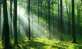 frasi alberi, citazioni alberi, aforismi alberi