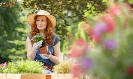come togliere piante vaso, rinvasare piante