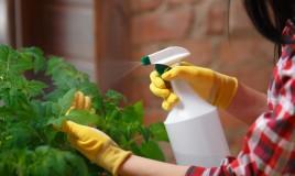 bicarbonato sodio piante