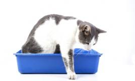 come togliere odore pipì gatto pavimento, togliere odore pipì gatto