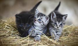 sognare tanti gatti, significato, interpretazione
