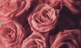profumo ambiente rosa