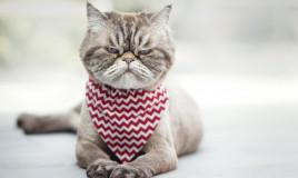 gatto, toccare, cause