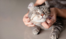 aforismi gatti