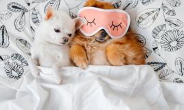razze, cani, appartamento