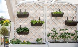 orto verticale balcone, orto balcone, orto verticale balcone come realizzare
