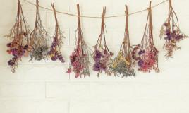 sognare fiori secchi, significato, interpretazione