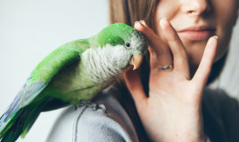 animali, cura, semplici