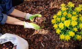 pacciamatura piante, pacciamatura cos'è, pacciamatura a cosa serve