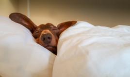Cani da appartamento taglia media: quali scegliere
