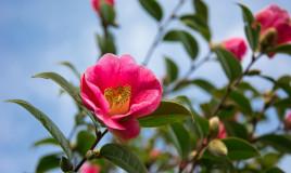 piante invernali con fiori, piante invernali, fiori invernali
