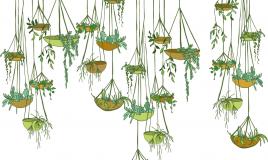 appendere piante consigli