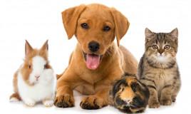Animali domestici più diffusi nel mondo