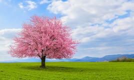 sfondi desktop paesaggi primaverili gratis, sfondi desktop primavera gratis