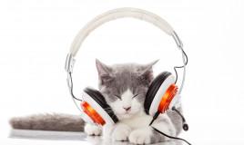 Musica rilassante per gatti