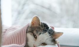 gatto, raffreddore, terapia