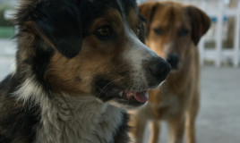 gelosia cane consigli
