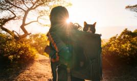 gatto vacanza consigli