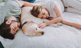 Quanto dormono i cani