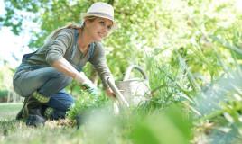 quali verdure piantare autunno, quali ortaggi piantare autunno