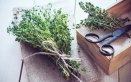 calendula erba madicina salute