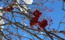 arte culinaria wellness trentino inverno sci