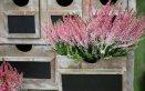 erica piante e fiori invernali
