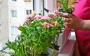 giardinaggio piante gelo freddo guarire accorgimenti consigli pollice verde donna donne