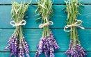 tarme pulizia armadio insetti vapore cassetti antitarme piante fiori lavanda sacchetti limone alloro