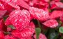 stella di natale abete piante invernali prendersi cura consigli