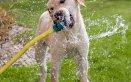 cane gatto animali vacanza proposte consigli cosa fare