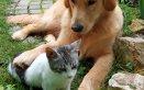 cane gatto obesità dieta suggerimenti pasti giornalieri alimentazione
