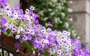 piante-balcone-fiori