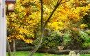 autunno-giardino-piante