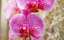 orchidea fiore pianta deodorante tonificante