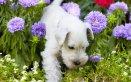 piante che odiano i cani