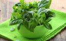 basilico-mediterraneo-pianta