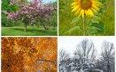 Le stagioni nei sogni