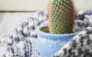 Prendersi cura delle piante e del giardino in inverno rimedi anti gelo