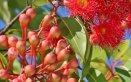 fiori australiani cosa sono e a cosa servono