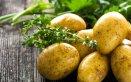 come coltivare le patate in vaso